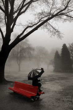 Red Bench, the Fog, and the Rain. Photography.