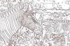 Malen Nach Zahlen Vorlage Zebra Tiere Malennachzahlen Tiere Vorlage Zebra Malen Nach Zahlen Vorlagen Malen Nach Zahlen Zahlen Vorlagen