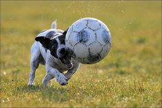 Let´s play soccer! by Elmar Weiss on 500px