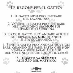 Regole e gatti