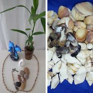 New 3 stones+ Mixed Natural 21 Seashells From Bible Land Holy Land Easter Gift