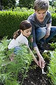 40chc0072rf Father and daughter gardening together