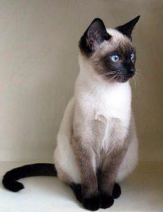 """chefepaulino: """"Minha louca e doce paixão por gatos """""""