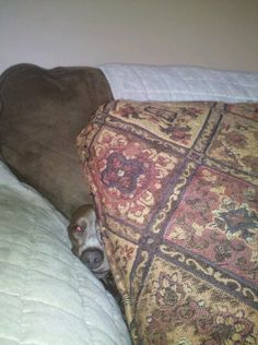 My Maddy hiding from her brother
