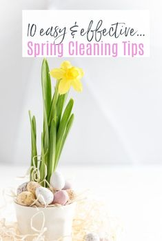 Make your home lighter and brighter with these top 10 spring cleaning tips that are simple easy and absolutely effective in helping you achieve that neat, clean and tidy home #springclean #cleaninghacks #cleaning #tidy #springcleaning Spring Pictures, Easter Pictures, Flower Pictures, Festival Paint, Easter Festival, Daffodil Flower, Narcissus Flower, Easter Weekend, Easter Brunch