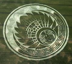 An impressive wheat design from Silbury Hill, July 2009