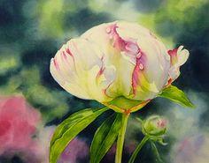 Watercolours - Florals