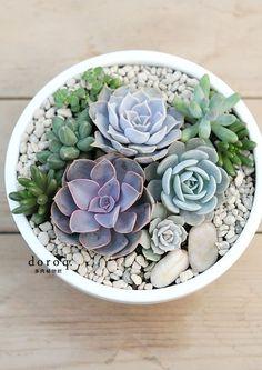 Simple, effective potted #succulent arrangement #gardening