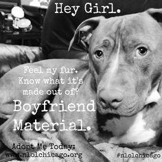 Hey girl ~ Don't shop...Adopt!
