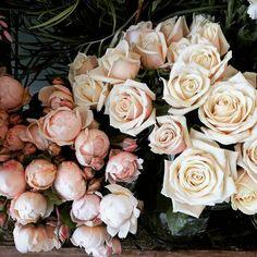 Garden roses in winter. I'm not complaining! Open until 6pm today... #chinaclay #clovelly #australianceramics #functionalceramics #ceramicsgallery #flowers #florist #gardenroses #davidaustinroses