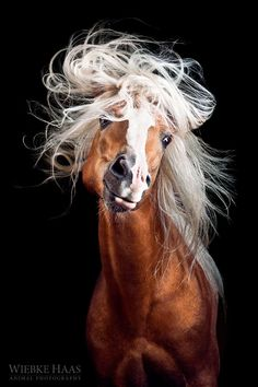 Fine art animal photography of multiple-award winning photographer Wiebke Haas. Find mesmerizing portraits especially of beautiful horses outdoor and in studio. All The Pretty Horses, Beautiful Horses, Animals Beautiful, Cute Animals, Animals Amazing, Wild Animals, Beautiful Eyes, Horse Photos, Horse Pictures
