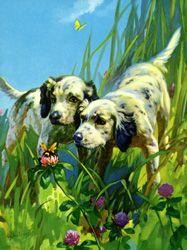 Vintage calendar/poster prints of dogs
