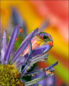 Macro Photography Tips for Point and Shoot Digital Cameras - Digital Photography School