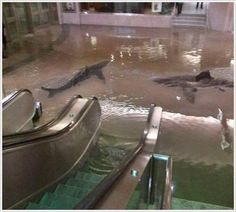 I have no idea if this is real or not, but a crazy thought, just the same! A shark tank burst in Kuwait, creating this beautiful fantasy/nightmare.
