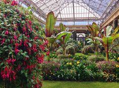 Fuchsia 'Lord Beaconsfield', Ensete | Flickr - Photo Sharing!