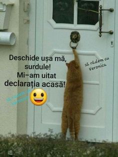 Meme Gen, Funny Moments, Funny Cats, Haha, Romania, Words, Memes, Smile, Gatos