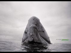 Print Ship for Greenpeace by Havas Worldwide - Southern Europe HQ - This is not wildlife. This is just wild. Save the oceans. Water Pollution, Best Ads, Southern Europe, Save The Planet, Whale, Planets, Wildlife, Graphic Design, Instagram Posts