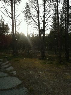 First snow in Peltovuoma, Lapland 2013