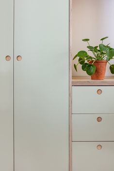 Custom Fronts/plywood kitchen/cabinet doors/painted kitchen/green kitchen/round handles/Ikea kitchen/Ikea hack/kitchen doors
