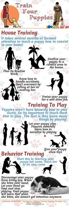 puppy training tips @Sabrina Majeed Majeed Majeed Kerr