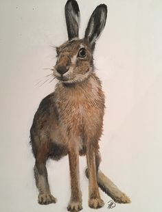 Hare, oil on artists board, animal art, British wildlife British Wildlife, Hare, Kangaroo, Oil, Artists, Fine Art, Animals, Baby Bjorn, Animales