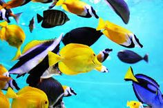 Resultado de imagem para imagens de peixes