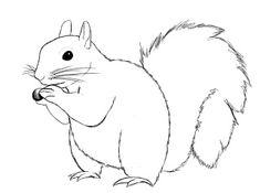 How To Draw A Squirrel Squirrel, Drawings and Embroidery Paper Drawing, Line Drawing, Animal Drawings, Pencil Drawings, Squirrel Art, Cartoon Sketches, Easy Drawings, Line Art, Painted Rocks