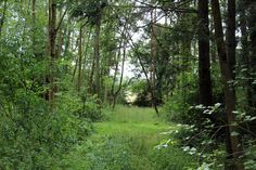 The deep south #nature - http://anenglishwood.com/?p=8214