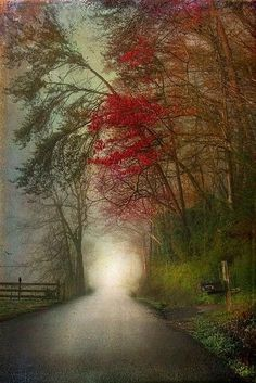Beautiful Nature (bluepueblo: Mystica Road, Tennessee photo via. Beautiful World, Beautiful Places, Simply Beautiful, Foto Poster, All Nature, Belle Photo, Pretty Pictures, Amazing Pictures, Beautiful Landscapes