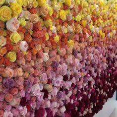 """Identity Design   Branding on Instagram: """"Rosas, texturas, colores y patrones.. 😍 Con @rosaprimaroses hemos trabajando en varios proyectos! Sin duda el último diseño y montaje de…"""" Boxwood Hedge, Hedges, Flower Wall, Branding, Flowers, Instagram, Roses, Colors, Patterns"""