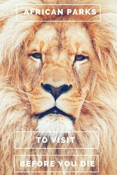 The best-known countries for African Safaris are Tanzania, Kenya, Botswana, Namibia and South Africa. Get ready for the best African safari experience at any one of the following national parks.