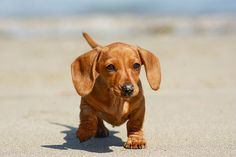 <3 Doxies <3