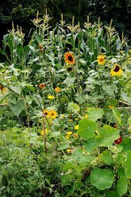 Homestead Revival: Adding Flowers To The Vegetable Garden to increase yield and natural pest control