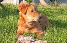 Dog Pictures, Real Food Recipes, Corgi, Animals, Corgis, Animales, Animaux, Animal, Animais