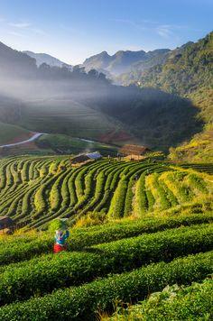 Plantation Sunshine by Korawee Ratchapakdee - Photo 153815081 - 500px
