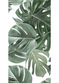 Our designs are printed on the best non-woven wallpaper there is. This type of wallpaper is easy to apply: bring your glue with a roller directly onto your wall. It's much easier and faster. Leaves Wallpaper Iphone, Palm Leaf Wallpaper, Plant Wallpaper, Botanical Wallpaper, White Wallpaper, Plant Background, Plant Aesthetic, White Plants, Burke Decor