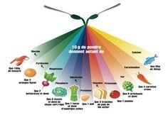 La spiruline est un excellent super aliment. Quels en sont les bienfaits ? Comment faut il la consommer ? Et où acheter de la spiruline ? Smoothie Legume, Holistic Nutrition, Superfoods, Healing, Recipe, Natural Medicine, Style, Green Algae, Being Healthy