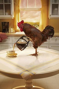 The best part about getting up with the chickens is that they can make the coffee.