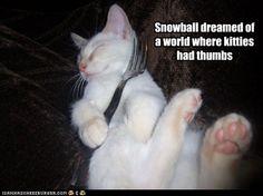 Oh my ragdoll Mishka dreams of this too!