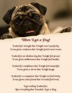Explore our website for more info on pug dogs. It is a superb place to find out more. Pug Quotes, Animal Quotes, Life Quotes, Funny Animal, Book Quotes, Animal Pictures, Pug Love, I Love Dogs, Pug Breed