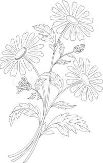Chamomile flowers, silhouettes | Stock Photo | Colourbox