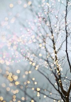 Winter branches glitter and lights wallpaper