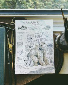 Прекрасные странички из мира дикой природы в зарисовках Lily Seika Jones