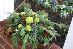 osage oranges or hedgeapples used in centerpieces