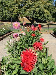 Point Defiance Rose Garden - Tacoma, WA, United States