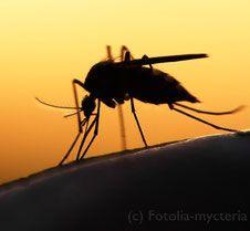 Nur DEET hilft gegen Mückenstiche doch wie sieht es mit den Nebenwirkungen aus?