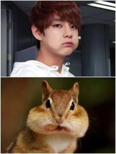 He sure looks lyk a squirrel! >.< soo cute