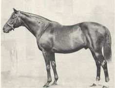 Nearco leads the world of horse racing being the most dominate male line in the history of the sport , bred by Federico Tesio was undefeated in 14 races