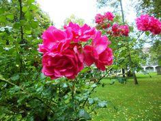 Flowers in Wurzburg, Germany
