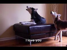 Talking Huskies....I swear VINNIE talks to me...:)